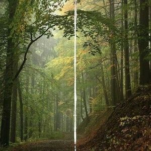 Curtains Foggy Forest Pathway Print Backdrop 37350